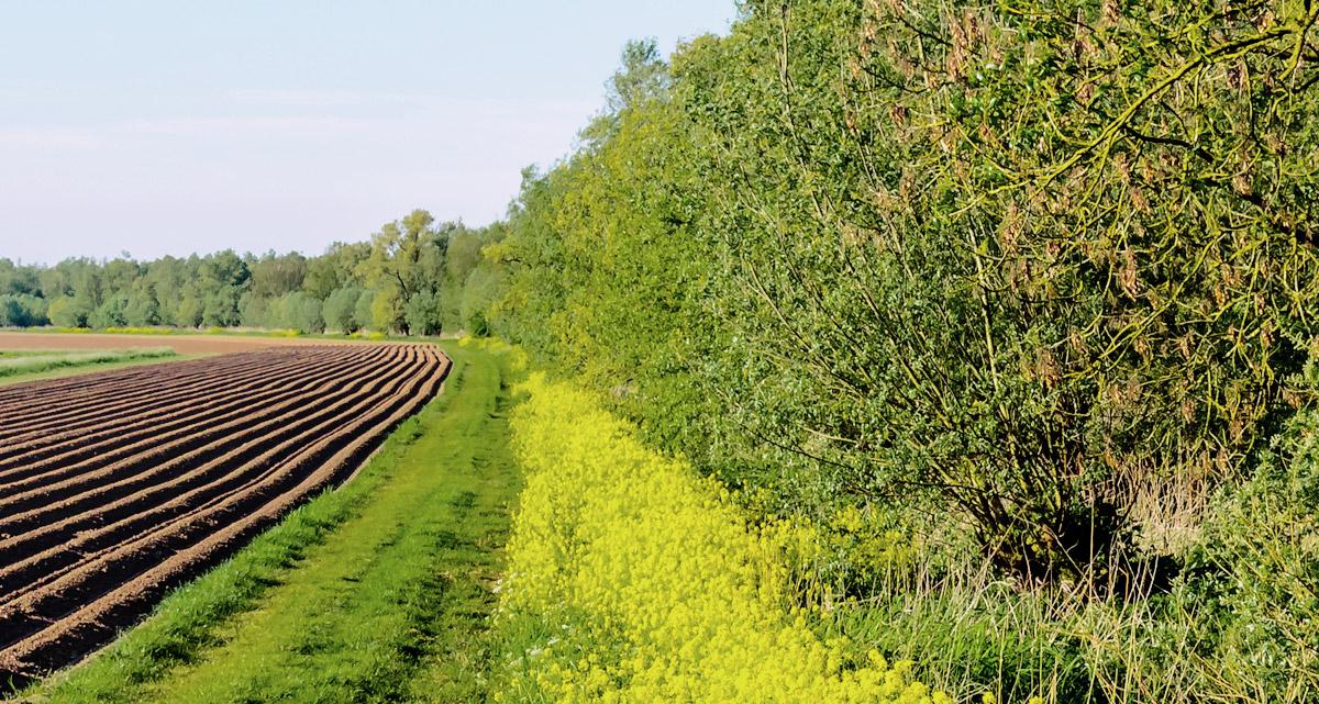 Landwirtschaft Content